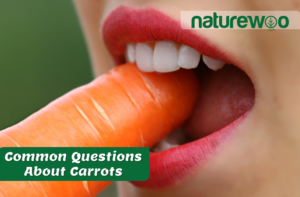 Common Questions About Carrots